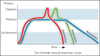 What are the phases of the sexual response cycle according to masters and johnson